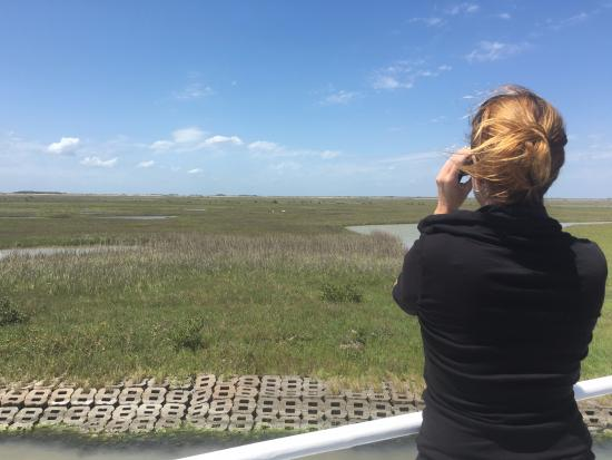 Rockport, TX: Birder on board the Skimmer watching a pair of Whooping Cranes eat snakes!