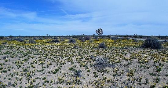 La mejor hierba de césped resistente a la sequía para el suelo arenoso | Propietario de hoy