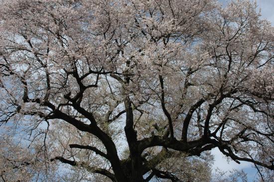 Nirasaki, Jepang: 咲いている模様