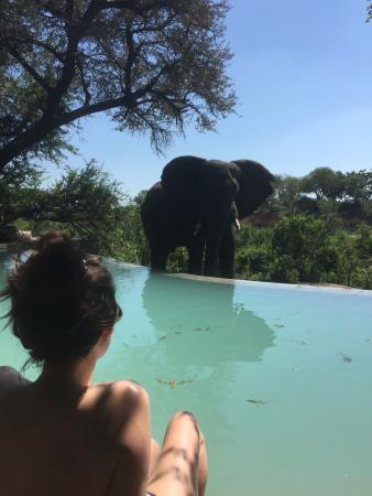 Ngala Private Game Reserve, Sudáfrica: an unexpected visitor at the pool...