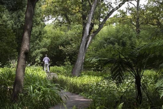 Somerset West, Afrique du Sud : The Wetlands at Vergelegen
