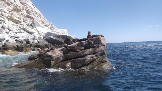 Buenavista, México: Sea Lion Colony at Cabo Pulmo