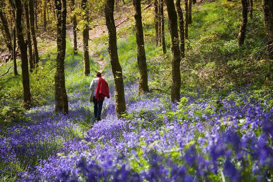 Llannerch Goch Luxury Cottages: Spring in Snowdonia