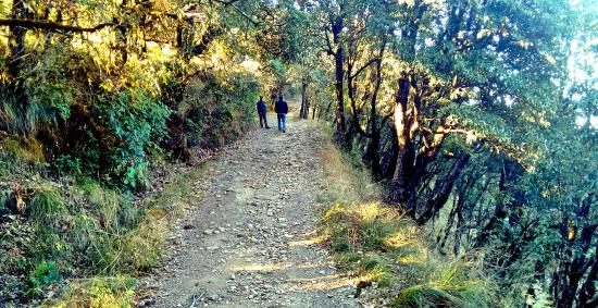 KMVN (Kumaon Mandal Vikas Nigam) Tourist Rest House: Jungle road to zero point