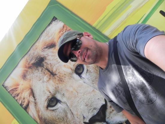 Serengeti Night Safari at Busch Gardens: O único leão que me aproximo é esse da foto, o resto só de longe kkk