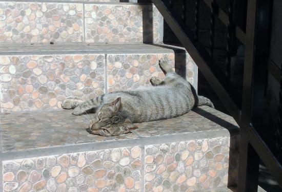 Somoto, Νικαράγουα: Petite chatte enceinte