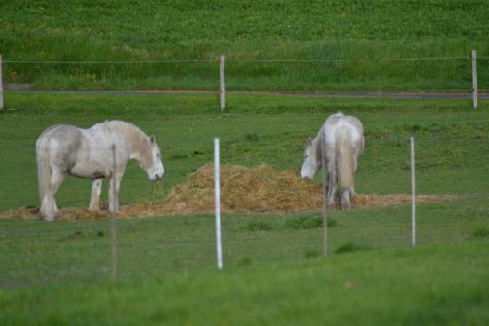 Roiffe, Frankrike: les chevaux des attelages du Cuzay