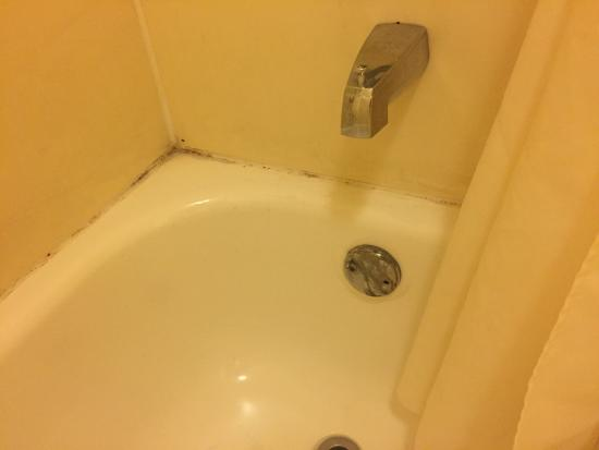 Days Inn Norfolk Airport: Mildew-covered grout on top of tub
