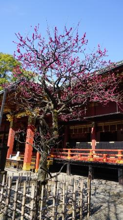 photo0.jpg - Picture of Nezu Shrine, Bunkyo - TripAdvisor