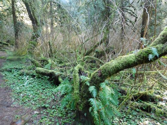 Tillamook, Oregón: Moss everywhere