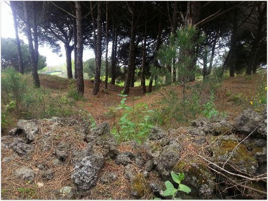 Terre di Sylva Mala: La pineta