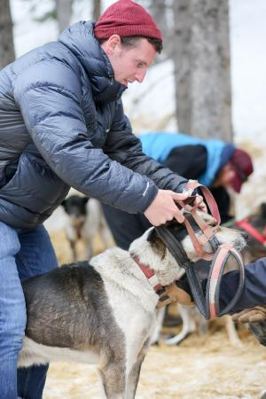Monarch, CO: Getting to help harness the dogs