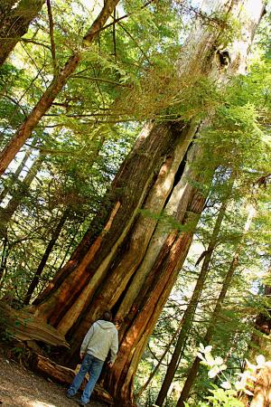 Water's Edge Shoreside Suites: Ancient Cedars Walk,Wild Pacific Trail