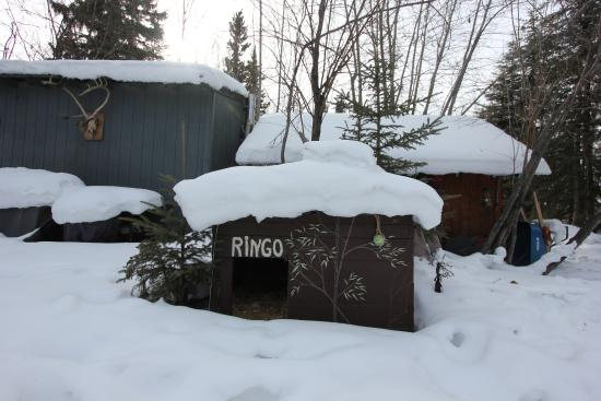 Billie's Backpackers Hostel: RIngo's home