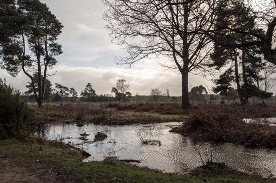 Skipwith Common National Nature Reserve