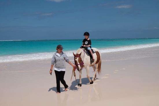 Oceanview Farm: Birthday boy on his beach ride!