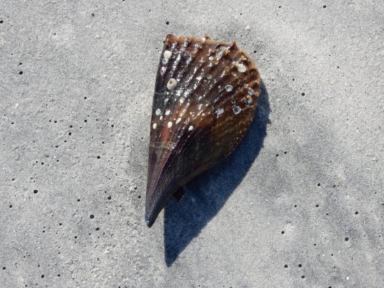 Boca Grande, Флорида: shell