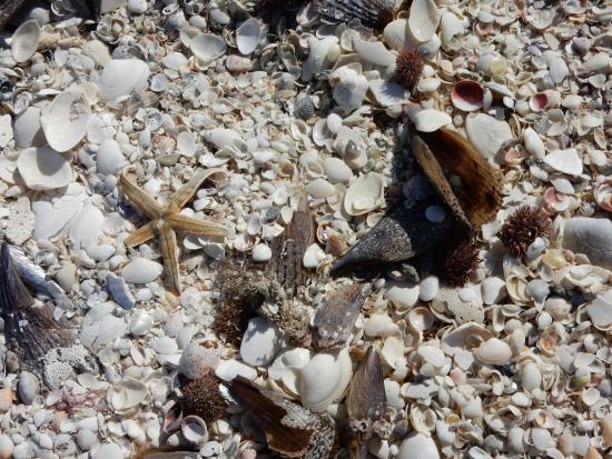 Boca Grande, Флорида: shells