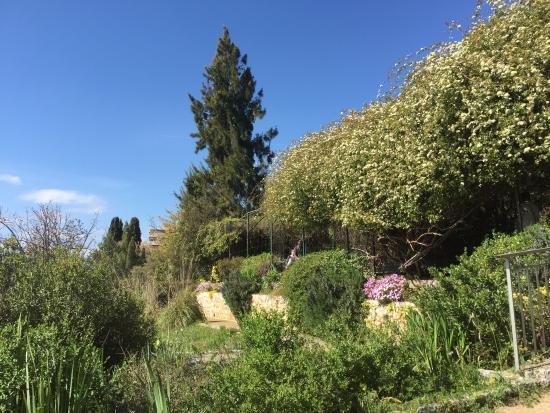 Picture of jardin botanique nice tripadvisor for Jardin botanique nice