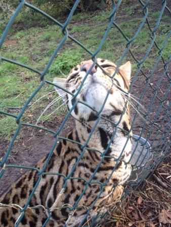 Exotic Pet Refuge Peterborough 2020 All You Need To Know Before You Go With Photos Tripadvisor