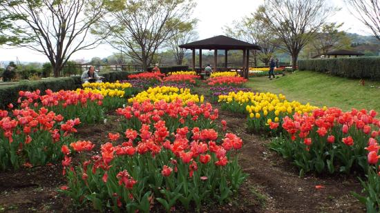 Tadano Togawa park