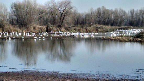 Colusa National Wildlife Refuge