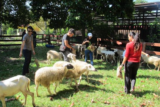V Goat Farm