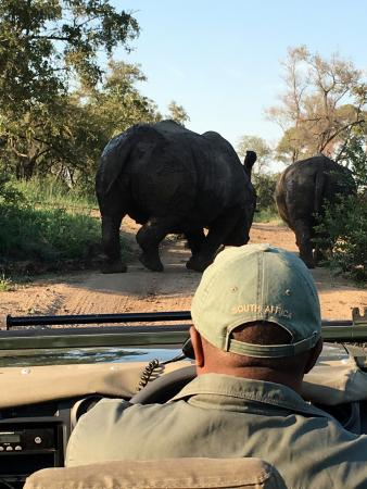 Notten's Bush Camp: Taken on phone from safari jeep