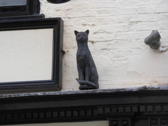 Scampering cats. - Picture of York Cat Trail, York - TripAdvisor
