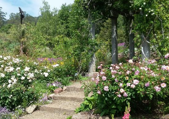 Amzing place to go this spring flowers, herbs it\'s a lot of new ...