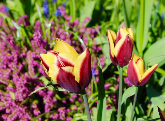 Courtenay, Kanada: English style gardens