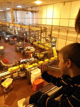 Tillamook, Oregón: Kids looking at cheese
