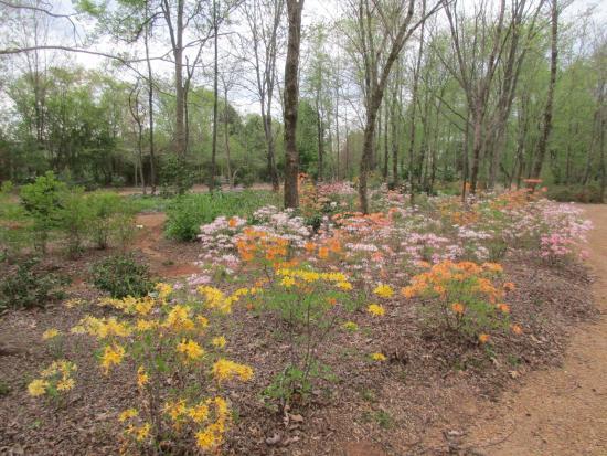 Huntsville, AL: Azalea trail