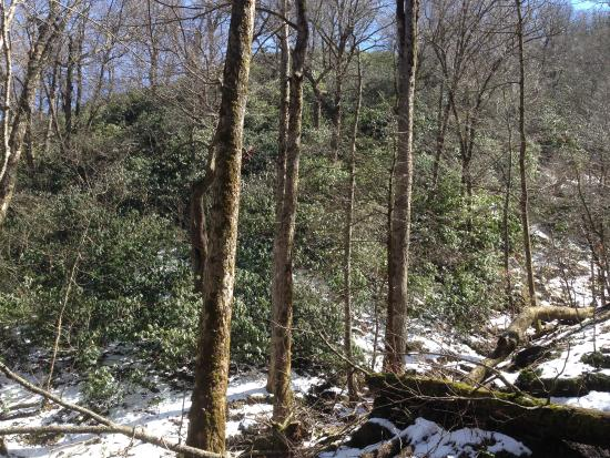 Cosby, TN: view from trail - snow still there