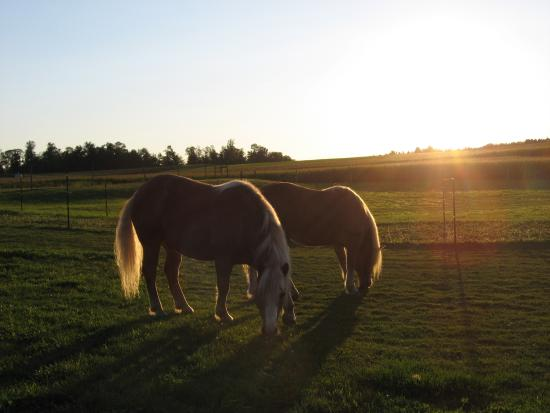 Punxsutawney, Pensilvanya: Sunset over the horse pasture