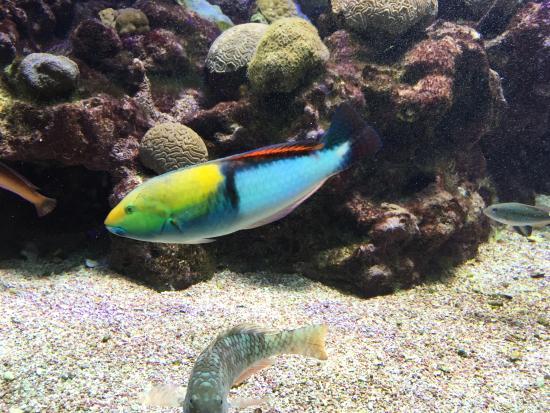 Hamilton, Bermuda: Cool fish