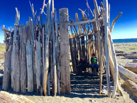 Ocean Shores, WA: Enough driftwood for constructing serious beach forts! Wow! We enjoyed this one that someone els