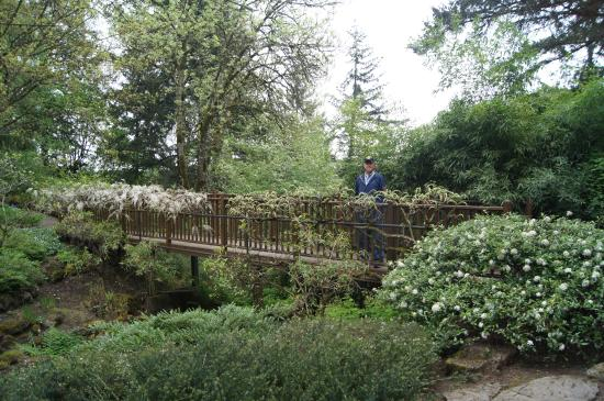 elk rock garden a bridge covered with wisteria - Elk Rock Garden