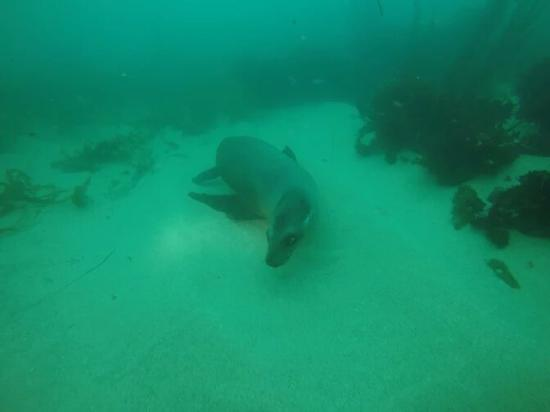 La Jolla Dive: 1ZALq9NFN5q1256QP0xfYIWXbLAgVrFEqms75nTemFRBg7WzBQoSRba7O0lyYuFVZg_705VK_w672-h894-rw_large.jpg
