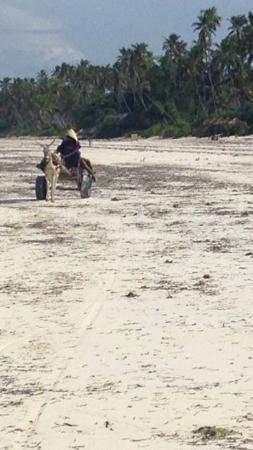 Che Che Vule: Sweet donkey cart on the beach