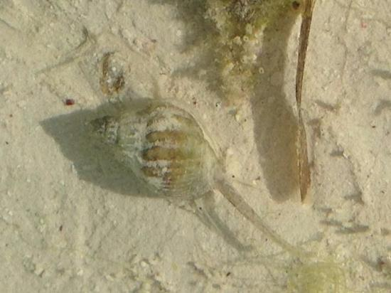 Che Che Vule: Amazing tidal pool creatures. Low tide and high tide are both amazing!
