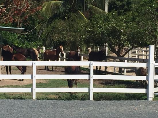 Rancho Buena Vista: Listos para la cabalgata