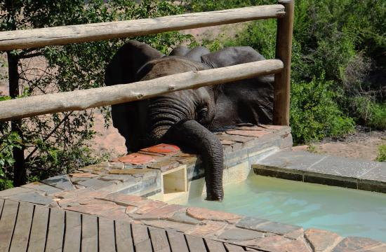 Ulusaba Private Game Reserve, Republika Południowej Afryki: Elephant sipping from plunge pool