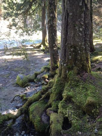 Nanaimo, Kanada: Trail beside the bank
