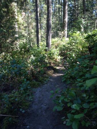 Nanaimo, Kanada: Trail through forest beside river