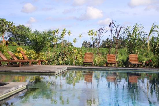 suasana kolam renang yang nyaman dan tenang picture of suly rh tripadvisor co nz