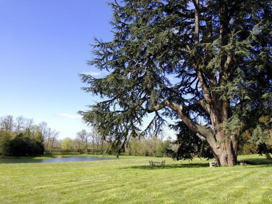 Domaine des Bidaudieres : ou un étang aux eaux calmes abrite de belles carpes