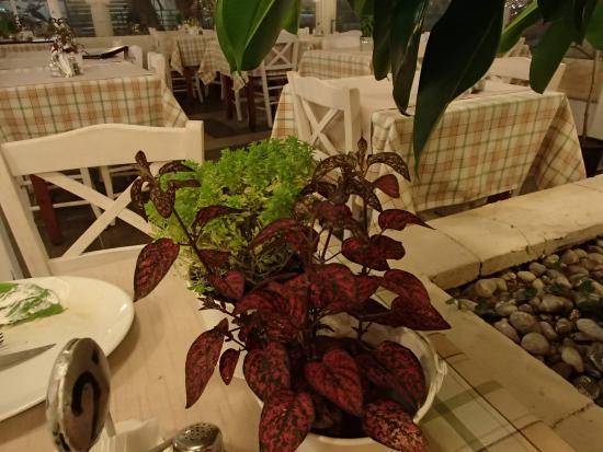Belmo Palace: Table decoration - Basil