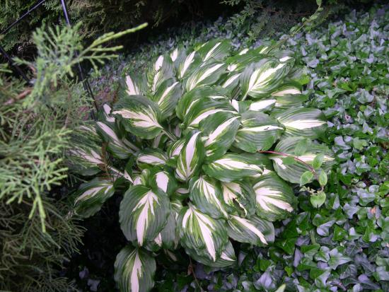 jardin paysager - Photo de Les Acacias, Fontainebleau - TripAdvisor