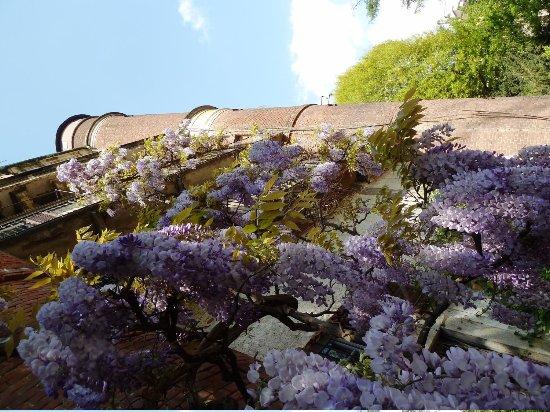 Giardino botanico brera milano lombardia italy travel